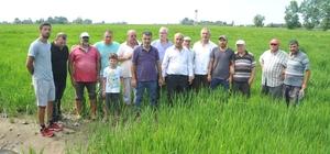 Bafra Ovası'nda çeltik tarlaları susuzluktan kurumaya başladı Kanaletlerden su gelmeyince binlerce dönüm çeltik tarlası kuruma riskiyle karşı karşıya kaldı