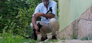 (Özel) Vanlı iş adamının hayvan sevgisi Vanlı iş adamı sahiplendiği yavru karga ile kediye çocuğu gibi bakıyor