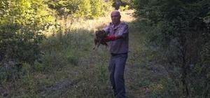 Dikenli telde yaralanan şahin tedavi sonrası doğaya salındı