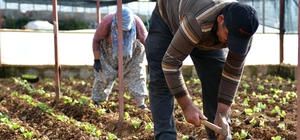 Antalya Büyükşehir Belediyesi, tarıma 4 yılda 210 milyondan fazla destek sağladı