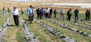 Türkiye'nin en soğuk ilçesinde çilek yetişti