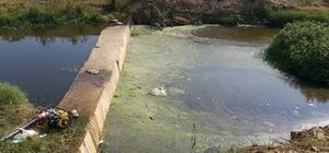 Çiftçiler tarım arazilerini kanalizasyon sularının da karıştığı dere yataklarından suluyor Beydağ Barajı'nda su seviyesinin düşük olması sebebiyle çiftçiler çaresiz kanalizasyon sularının da karıştığı dere yataklarından tarım arazilerini sulamak zorunda kalıyor