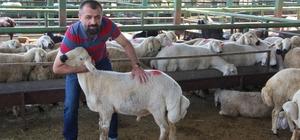 Birlik Başkanı Akın canlı hayvan pazarını ziyaret etti