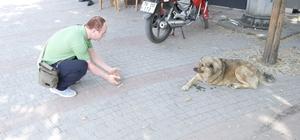 (Özel) Üç ayağıyla caddelerin maskotu oldu Hayvanseverler sokak köpeğine protez takılmasını istiyorlar