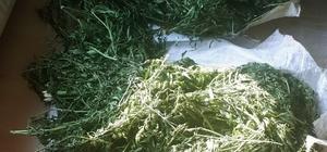 Dalaman'da esrar operasyonu Muğla'nın Dalaman ilçesinde Emniyet NARKO ekiplerinin düzenlediği uyuşturucu operasyonunda 20 kilo 600 gram esrar ele geçirildi.