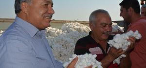Türkiye'nin pamuk ambarı Söke'de ilk pamuk hasadı yapıldı Söke'nin ilk pamuğu 60 TL'den satıldı