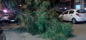 Devrilen ağacın altından son anda kurtuldu Tekirdağ'da 40 yıllık ağaç rüzgara dayanamadı