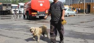 İşçilerin sahiplendiği köpek, atık fabrikasında çıkan yangında tahliye görevlisi gibi çalıştı Tüyleri siyah isle kaplan köpek, yangın alanına girerek işçilerin dışarı çıkmasına eşlik etti