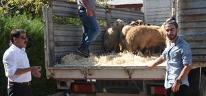 Tunceli'de genç çiftçilere bin 20 koyun dağıtıldı