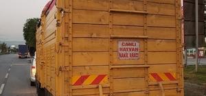 'Hayvan nakil aracı' yazan kamyondan 7 bin litre kaçak mazot çıktı