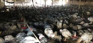 Çiftlik yangınında 8 bin hindi ve 10 buzağı telef oldu Kocaeli-İstanbul sınırında yanan çiftlik 3 saatte söndürüldü