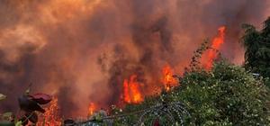 """Mudanya'daki yangının sigara izmaritinden çıktığından şüpheleniliyor Bölge Orman Müdürü iddialara cevap verdi: """"Ranta müsaade etmeyeceğiz"""""""