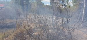 Arıcının yaktığı ateş ormana sıçradı Yangında 25 kovan ve yaklaşık 5 dönüm orman yandı