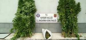 Bünyan'da esrar operasyonu