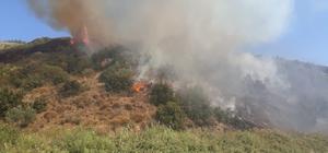Söke'de arazi yangını