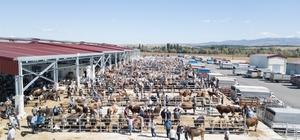 Hayvan pazarında bayram hareketliliği yaşanıyor