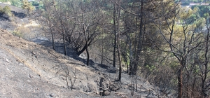 Defne'de arazi yangını Hatay'da arazide çıkan yangın evlere sıçramadan söndürüldü