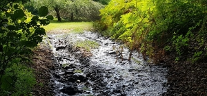 Dereye resmi araçla kanalizasyon atığı dökülmesine soruşturma Vatandaşlar çekti, valilik soruşturma başlattı