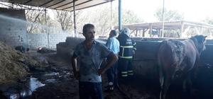 Hatay'da ahırda yangın çıktı Çıkan yangında, 1 büyükbaş hayvan telef oldu, 5 büyük baş hayvan ve tonlarca saman zarar gördü