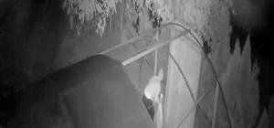 Kümesten tavuk hırsızlığı güvenlik kamerasında Kümese giren hırsız 6 tavuktan 5'ini çaldı Hırsız, çaldığı tavukları çuvala koydu
