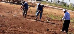 Harran'da Kurban Bayramı hazırlıkları sürüyor