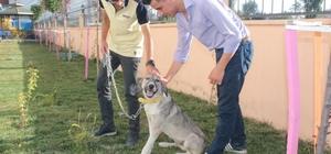 Ölüme terk edilen köpek, engellilerin 'Dost'u oldu