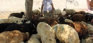 Kurban satıcısı her yerde alacak verecek defterini arıyor Muş'tan Adana'ya getirdiği 150 küçükbaş hayvanın bir çocuğunu satan Nusret Aydemir, alacak verecek defterini kaybedince kimden ne kadar para aldığını ve kime hangi hayvanı vereceğini bilemediğini söyledi