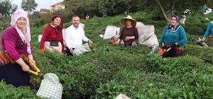 """AK Parti Giresun Milletvekili Öztürk'ten  çay üreticilerine destek AK Parti Giresun Milletvekili Sabri Öztürk; """" Giresun'da çay üretiminden geçimini sağlayan üreticiler ve özel sektör çay fabrikaları için iyileştirme çalışmaları yapacağız"""""""