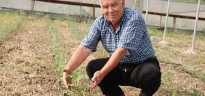 Karaisalı'da seracılıkta farkındalık sağlandı Seranın birinden 6 diğerinden 7 ton ürün hasat edildi Seralara 2. üretim dönemi için fide dikimi tamamlandı