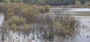 Kuyucuk Gölü kurudu, yaban hayvanları baraj gölüne sığındı