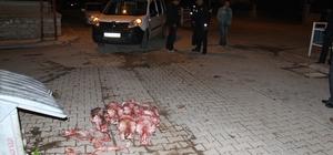 At kesildiği şüphesi tedirgin etti Konya'nın Beyşehir ilçesinde çöpe at kafaları atıldığı ihbarı üzerine ekipler hareket geçerken, kafa kemiklerinin at değil, sığıra ait olduğunu belirledi