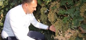 """Vali Kaldırım;""""Elazığ üzümde önemli bir üretim merkezi"""""""