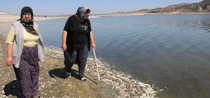 Balık ve kerevitlerin ölüm nedeni oksijensizlik
