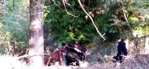 Manisa'da otomobil 30 metrelik uçuruma yuvarlandı Yaşlı çift ölümden döndü
