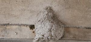 İş yerinde gelen sesleri takip etti, gördüğüne inanamadı Sivas'ta marangozluk yapan Fatih Kapkın, iş yerinin tavanında yaban arısı yuvası ile karşılaştı