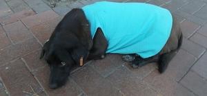 Burhaniye'de sokak köpeği vatandaşların maskotu oldu