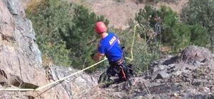 Kayalıklarda mahsur kalan av köpeğini AFAD ekipleri kurtardı