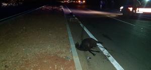 Hatay'da iki otomobil yoldaki keçilere çarptı: 13 küçükbaş hayvan telef oldu Hassa karayolunda 'küçükbaş hayvan' paniği Araçlar karanlıkta görülmeyen küçükbaş hayvanlara çarptı