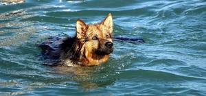 Bu köpek yetenekleri ile şaşırtıyor Elinden her iş gelen köpek herkesi şaşırtıyor