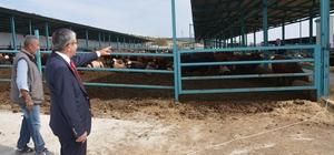Başkan Vidinel'den besi çiftliğine ziyaret