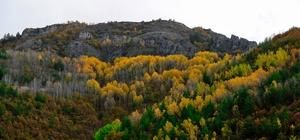 Gümüş şehir altın rengine büründü Gümüşhane'de sonbahar güzellikleri