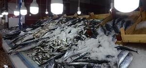 Balıkçıların gözü hamside Palamut balığının çok çıktığı avlanma sezonunda hamsinin az olacağını söyleyen balıkçılar, hamsi avlamak için gün sayıyor