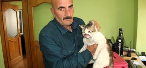 Kanserli kedi tedavi için İstanbul'a gönderildi