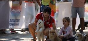 Marmaris'te köpek güzellik yarışması yapıldı