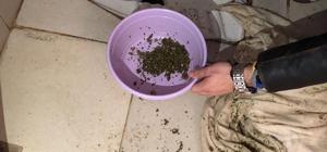 Balıkesir'de uyuşturucu operasyonu Edremit'te bir eve yapılan operasyonda bir kişi uyuşturucu maddeyi tuvalete dökerken yakalandı