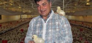 Yöneticiliği bıraktı, aldığı destekle kendi işinin patronu oldu Elazığ'da 23 yıldır bankalarda yöneticilik yapan Fahir Ersoy, TKDK'dan aldığı yüzde 65 hibe ile etlik piliç tesisi kurarak kendi işini yapmaya başladı