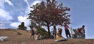 Çocuklar dağ bayır gezerek alıç topladı