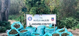 Muğla'da 1,2 milyon TL'lik uyuşturucu operasyonu Muğla'nın Yatağan ilçesinde 1 milyon 200 bin TL değerinde 119 kilo kubar esrar ve arazide ekili vaziyette 925 kök Hint keneviri ele geçirildi