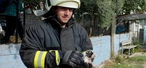 Boğulmak üzere olan yavru köpekleri itfaiye kurtardı