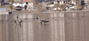 Enerji üretimi için kurulan baraj Türkiye'nin yeni kuş cenneti oldu 300 milyon dolara mal olan Obruk Barajı, Türkiye'nin gizli bir biyolojik zenginlik alanı olarak dikkat çekiyor Obruk'ta yaklaşık 20 familyadan 110'a yakın kuş türü tespit edildi 30 bin bireye yakın kışlayan kuş popülasyonuna sahip Obruk Barajı aynı zamanda baharda üreyen kuş türlerine de ev sahipliği yapıyor Türkiye'de en çok kış kuşu popülasyonuna sahip 17. sulak alan olan Obruk'ta akkuyruklu kartal, kara ve küçük akbaba ile şah kartalı gibi nesli tükenme tehlikesi altında olduğu için koruma altına alınan kuş türleri de  bulunuyor Doğal güzelliğiyle de fotoğraf tutkunlarının gözde mekanları arasında yer alacak olan Obruk, kurulması planlanan doğa parkuruyla birlikte turizme de katma değer sunacak.